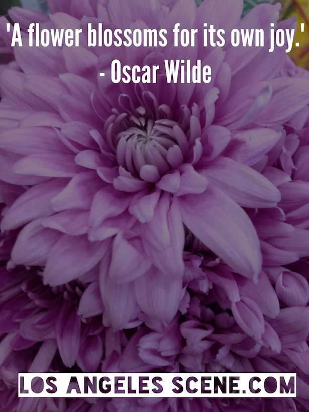 Inspirational Quote of the day - Oscar Wilde