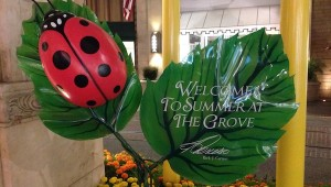 Summer at the grove - picture 3