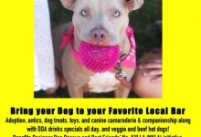 Dog Adoptions in Santa Monica Lincoln in Venice Beach